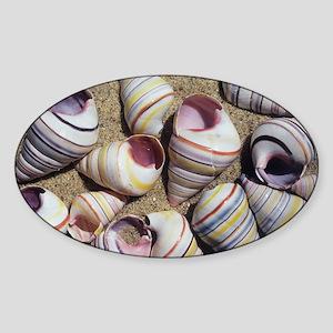 Freshwater snail shells - Sticker (Oval)