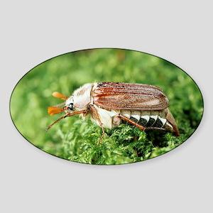 Garden chafer - Sticker (Oval)