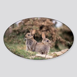 European rabbits - Sticker (Oval)