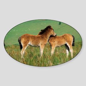Exmoor ponies - Sticker (Oval)