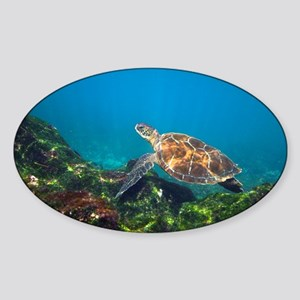 Green sea turtle - Sticker (Oval)