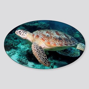 Green turtle - Sticker (Oval)