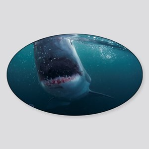 Great white shark - Sticker (Oval)