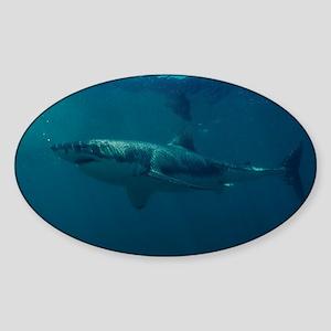 Great white shark - Sticker (Oval)