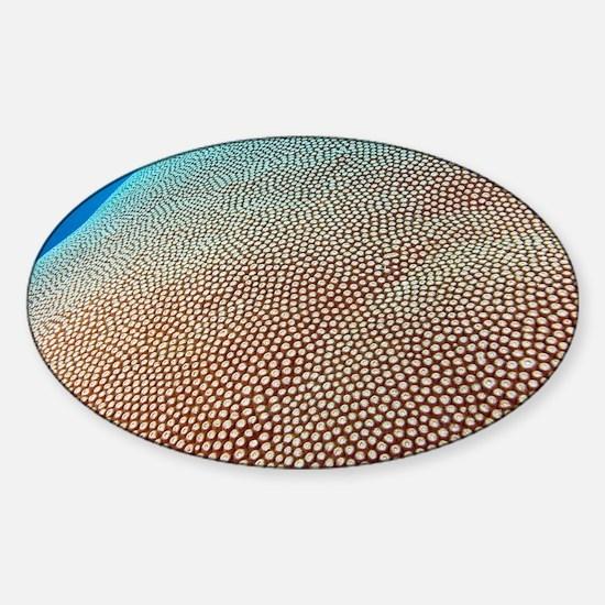 Hard coral colony - Sticker (Oval)