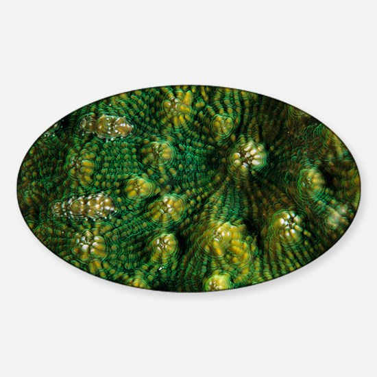 Knobby cactus coral - Sticker (Oval)