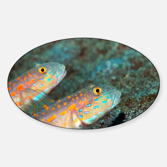 Maiden goby pair - Sticker (Oval)