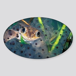 Male frog and spawn - Sticker (Oval)