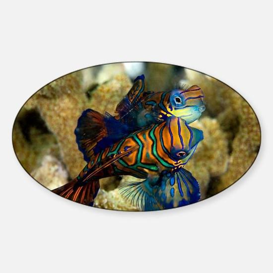 Mating mandarinfish - Sticker (Oval)
