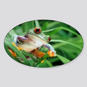 Red-eyed tree frog - Sticker (Oval)