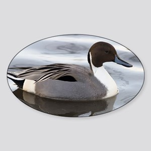Pintail - Sticker (Oval)