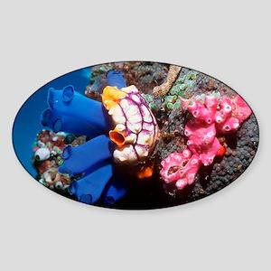 Sea squirts - Sticker (Oval)