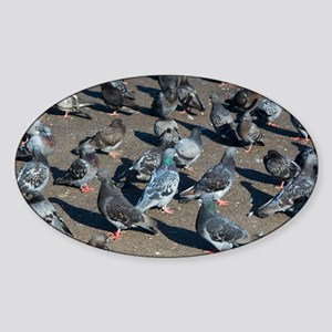 Rock pigeons - Sticker (Oval)