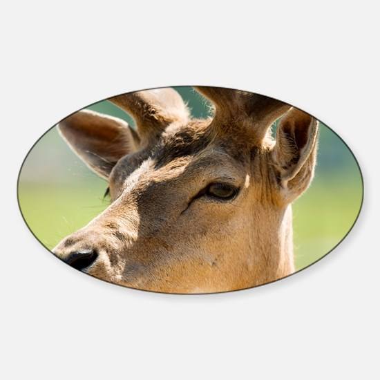 Red deer stag - Sticker (Oval)