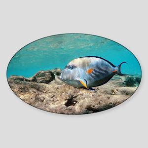 Sohal surgeonfish - Sticker (Oval)
