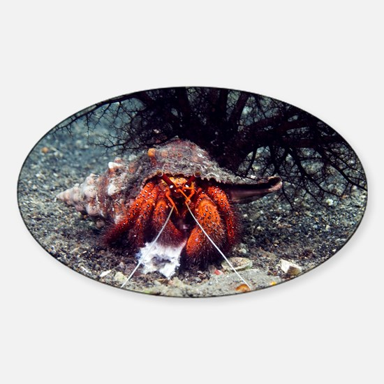 Shell-breaking hermit crab - Sticker (Oval)