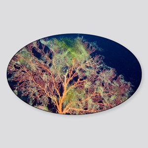 Sea fan - Sticker (Oval)