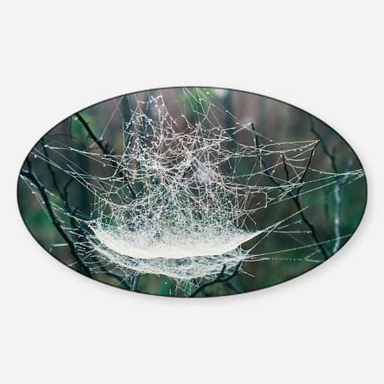 Spider web - Sticker (Oval)