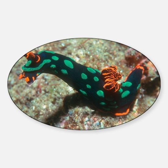Sea slug - Sticker (Oval)