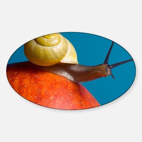 Snail - Sticker (Oval)