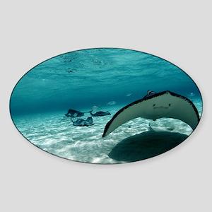 Southern stingray - Sticker (Oval)
