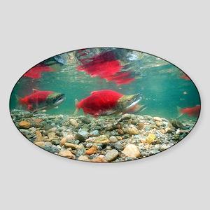 Spawning sockeye salmon - Sticker (Oval)