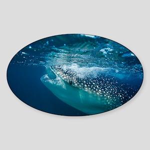 Whale shark filter feeding - Sticker (Oval)