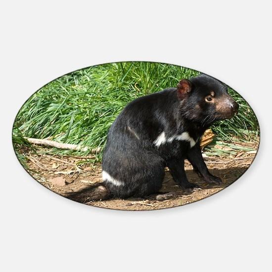 Tasmanian devil - Sticker (Oval)