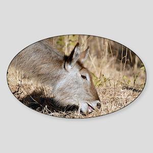 Waterbuck female - Sticker (Oval)