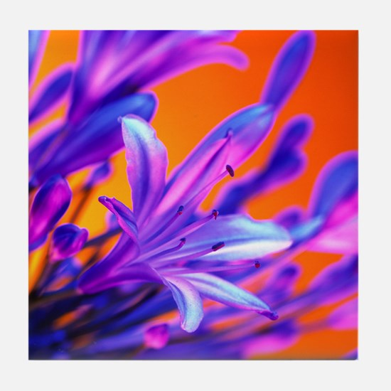 African lily (Agapanthus sp.) - Tile Coaster
