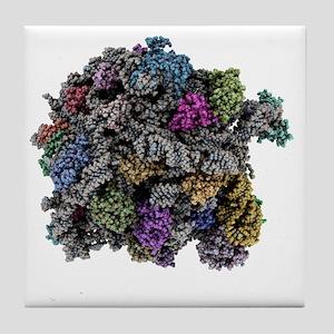 Ribosomal subunit, molecular model - Tile Coaster
