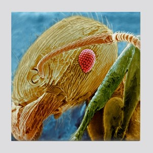 Black garden ant's head, SEM - Tile Coaster