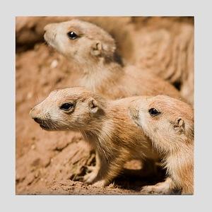 Black-tailed prairie dogs - Tile Coaster