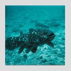 Coelacanth fish - Tile Coaster
