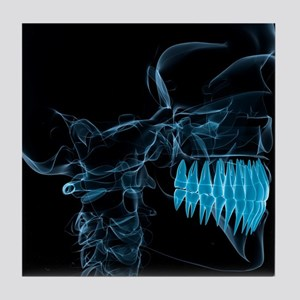 Head anatomy, artwork - Tile Coaster