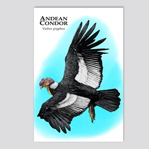 Andean Condor Postcards (Package of 8)