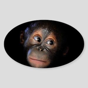Baby Orangutan Face Sticker (Oval)