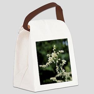 Artemisia flowers - Canvas Lunch Bag