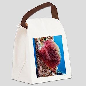 Algae - Canvas Lunch Bag