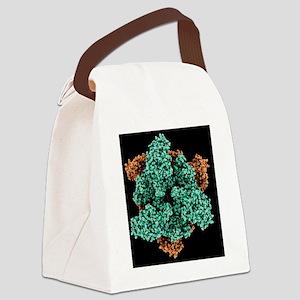 ATP sulfurylase molecule - Canvas Lunch Bag