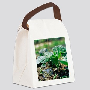 Brussels sprout plant - Canvas Lunch Bag
