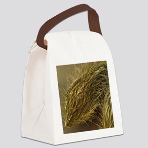 Seed of Old Man's Beard, SEM - Canvas Lunch Bag