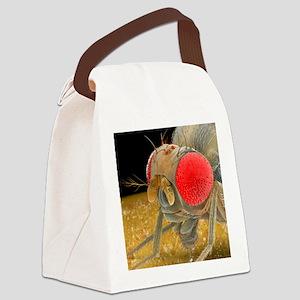 Fruit fly, SEM - Canvas Lunch Bag
