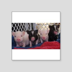 Baby piggies Sticker