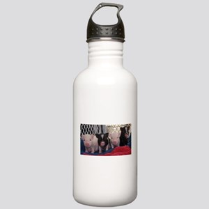 Baby piggies Water Bottle