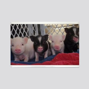 Baby piggies Rectangle Magnet