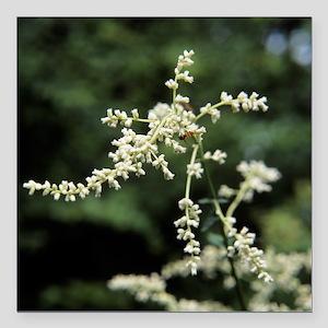 Artemisia flowers - Square Car Magnet 3