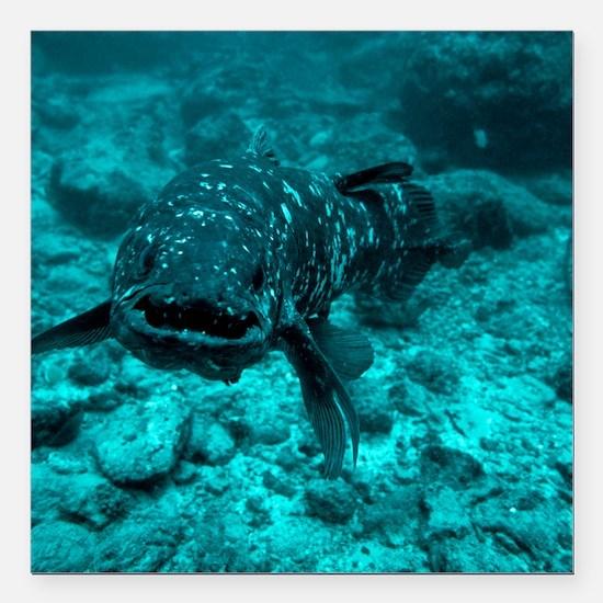 Coelacanth fish - Square Car Magnet 3
