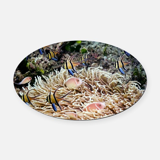 Tropical reef fish - Oval Car Magnet