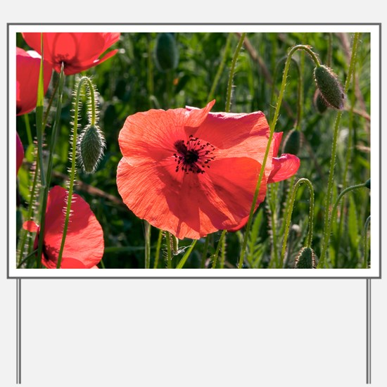 Poppies (Papaver rhoes) and grass - Yard Sign